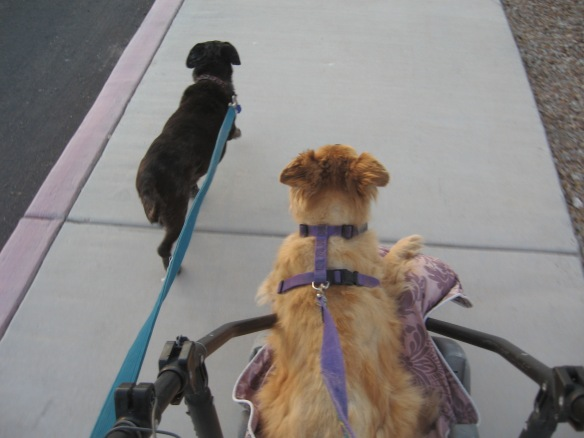 Little Red-Haired Girl taking her new wheels out for a try. Gertie taking the lead.
