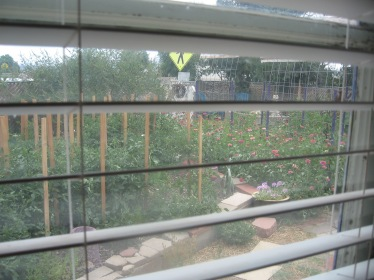 The Garden view from the sewing machine station in the living room