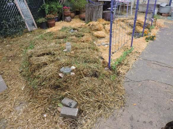 Hugelkultur, soil building, front yard farming
