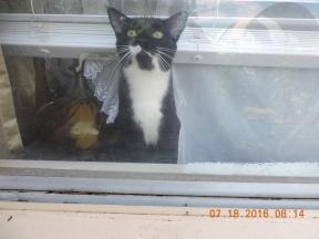 The 'Got Milk' kittyboy